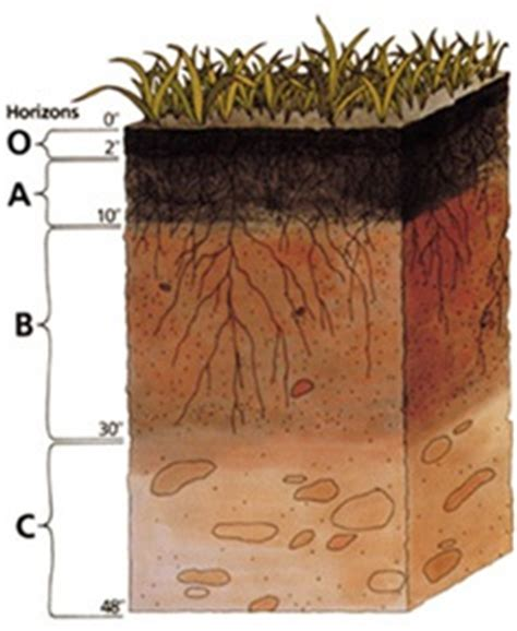 peat colour meaning soil horizons soils 4 teachers