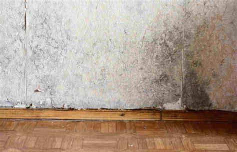 muffa muri interni muffa sui muri per perdite d acqua cosa fare per rimediare