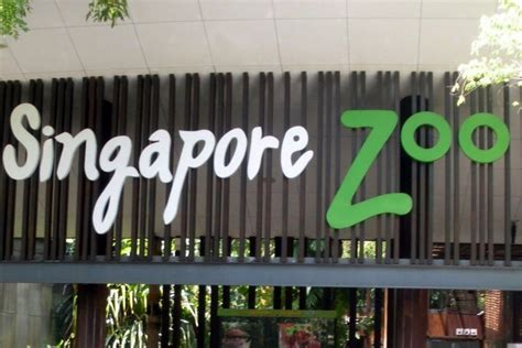 singapore zoo singapore attractions review