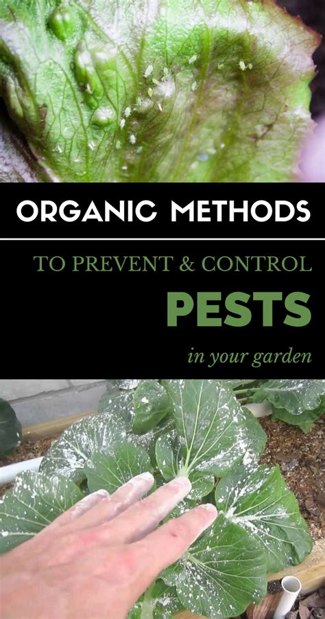 organic methods  prevent control pests   garden