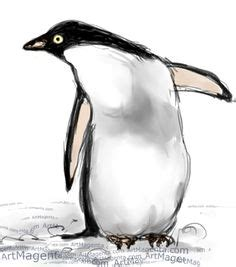 adelie penguin diagram adelie penguin diagram search animal