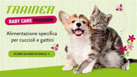 cuccioli di alimentazione come alimentare cuccioli e gattini da appena nati ad adulti