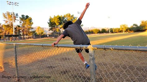 jumping fence jumping fence breeds picture