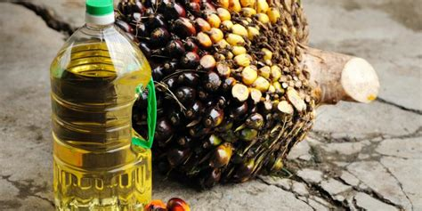 Minyak Kelapa Sawit Dunia soal kelapa sawit indonesia adalah quot timur tengah quot dunia