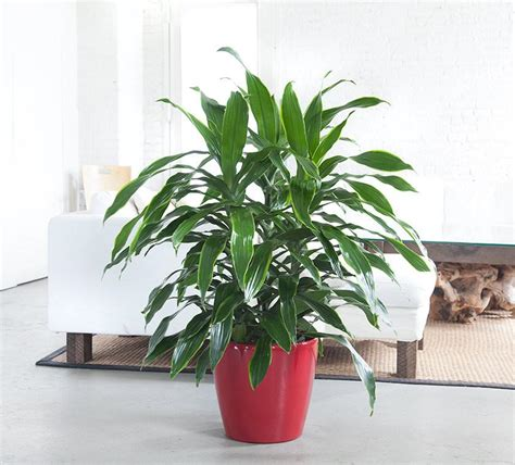 easy plants indoor plants nyc office and house plant delivery