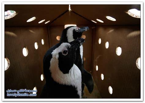 Animal World 19 Tshirtkaosraglananak Oceanseven 2009