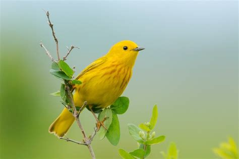 Backyard Yellow Birds Comfort And Solace The Healing Power Of Birds In The