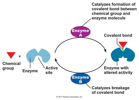 protein kinase is an enzyme that chapter 3