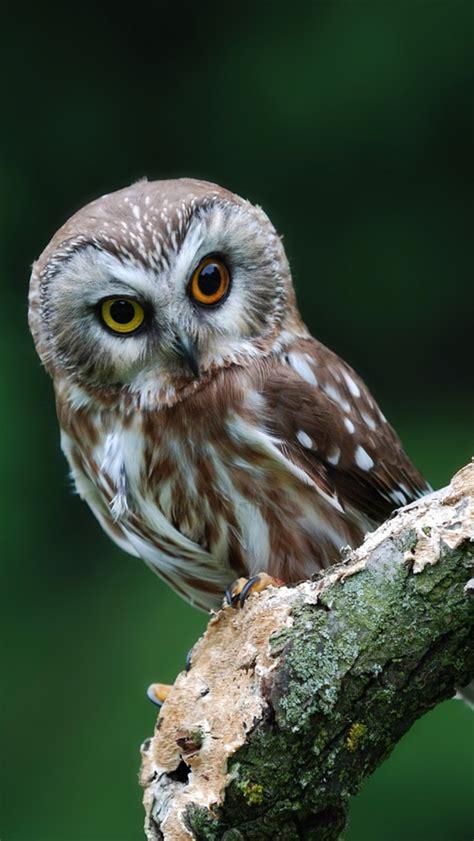 cute owl iphone wallpapers wallpapersafari