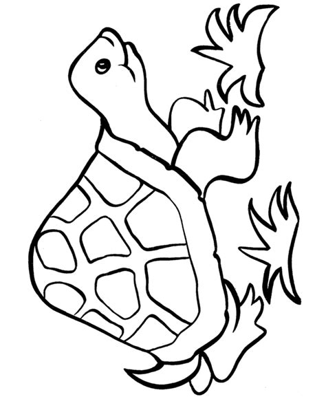 free turtle coloring pages turtle coloring pages free printable pictures coloring