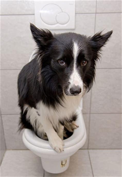 cosa fare in caso di cistite la cistite nei cani e come risolvere l infezione delle vie