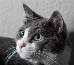 why do cats whiskers why do cats cats guide