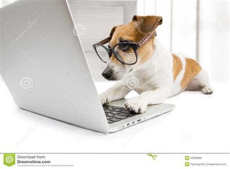 Pc Dogs smart working with pc stock photo image 43558890