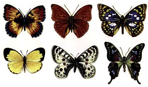 butterfly color large butterfly color enamel decals delphi glass