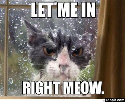 Meow Meme - let me in right meow