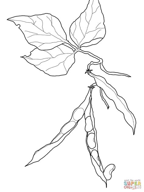 kidney beans coloring page free printable coloring pages