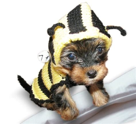 a bee puppies bee sweater bumble bee costume coat