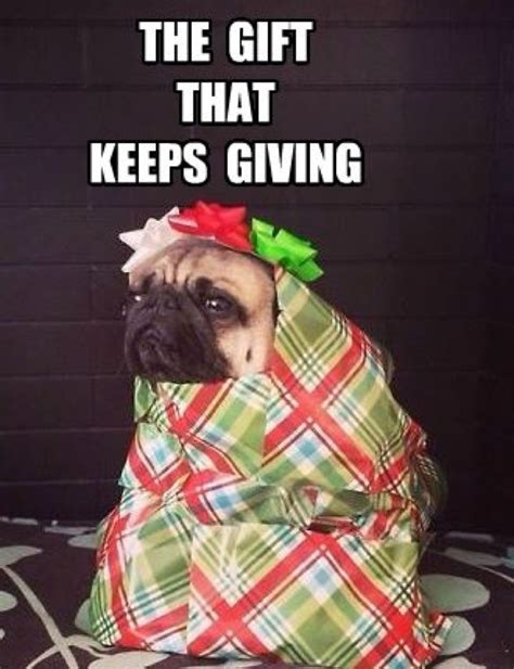 Birthday Pug Meme - pugs pugs and more pugs