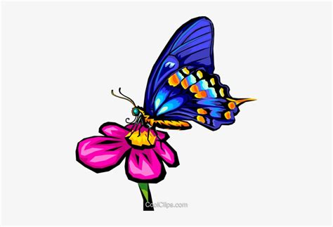 ultima mariposa animada png animalart house