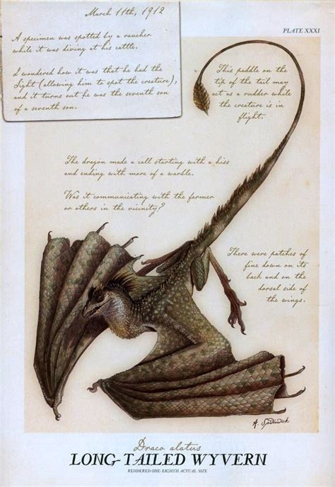 libro arthur spiderwicks field guide long tailed wyvern by tony diterlizzi from arthur spiderwick s field guide spiderwick