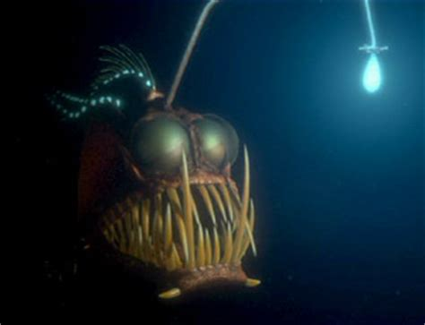 Finding Nemo Light Fish by Anglerfish Disneywiki