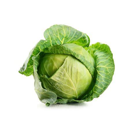 greenwhite cabbage veggycation