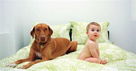dogs  protect babies  illnesses ny daily news