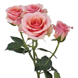 Wedding Flower Vases Wholesale - antique pale pink spray rose