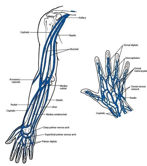 vein pattern meaning does the ring finger of the left hand have a vein that