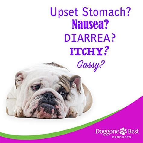 probiotics for puppies with diarrhea probiotics for dogs best probiotics for diarrhea gas skin allergy itch