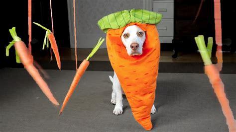 dogs and carrots carrot vs floating carrots maymo doovi