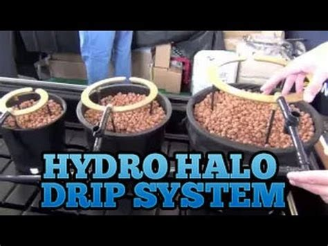 Grow Room Watering System by Hydro Halo Halo S Grow Room Drip System Setup Best