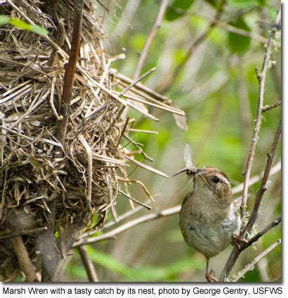 wrens of maryland maryland s wild acres
