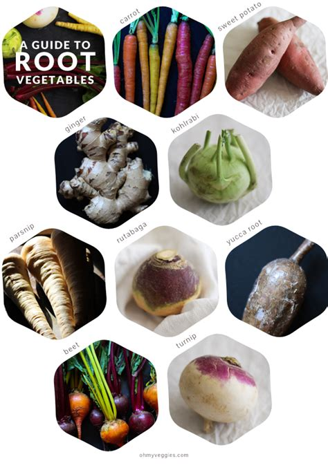 root vegetables t a guide to root vegetables