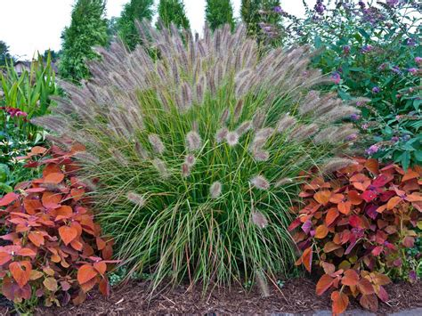 Planting in the Fall for the Perfect Spring Garden