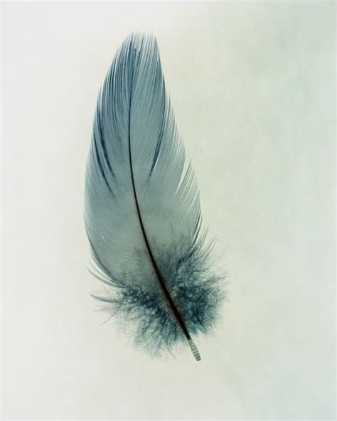 feather tattoo cliche this watercolour of a beautiful feather looks as soft as