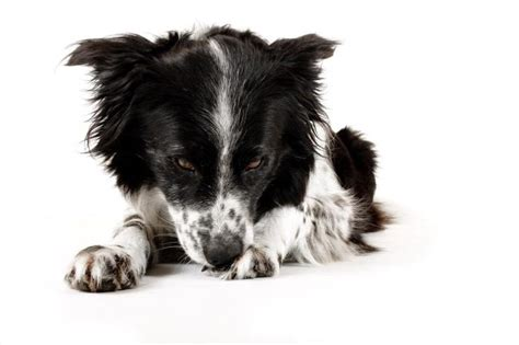epsom salt for dogs how to soak a s in epsom salts cuteness