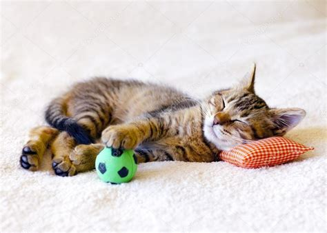Dormir Avec Plusieurs Oreillers by Chaton Dormir Sur Un Oreiller Avec Un Ballon De Soccer