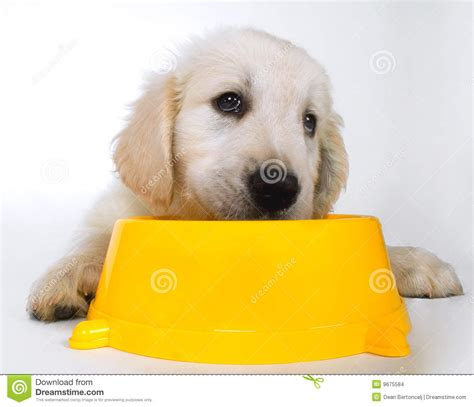 puppy waiting sad puppy waiting for food stock images image 9675584