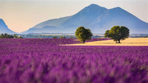 purple farm awesome nature wallpapers hd wallpapers rocks