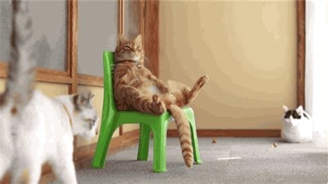 cat on chair gif chillin in my chair cat gifs