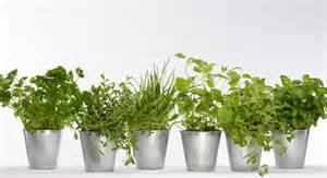 mon mini jardin de plantes aromatiques prima