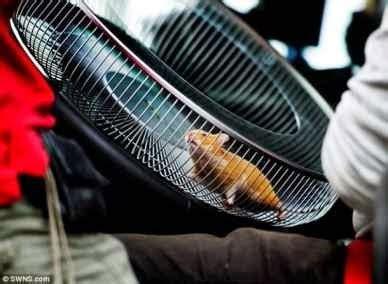 Pasukan Hamster hamster memandu trak 15 sibersensasi
