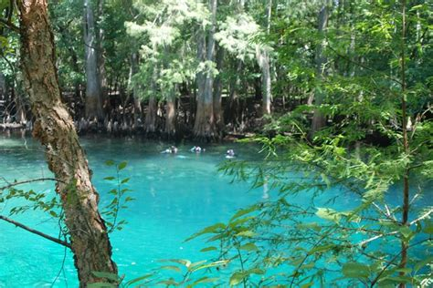 suwannee river motel fanning springs fl three days of lower suwannee springs florida hikes