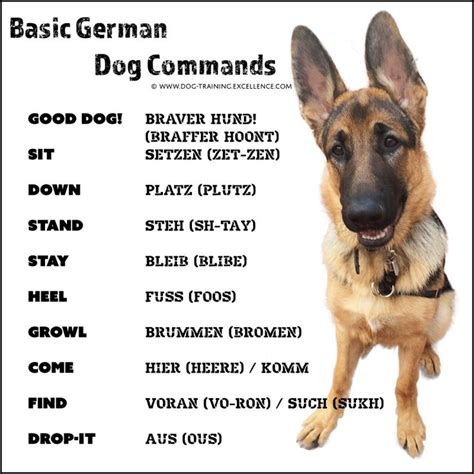 trained german shepherd puppies best 25 german shepherd ideas on