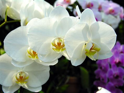 fiori colori e decori fiori colori e decori di un matrimonio d inverno sposarsi