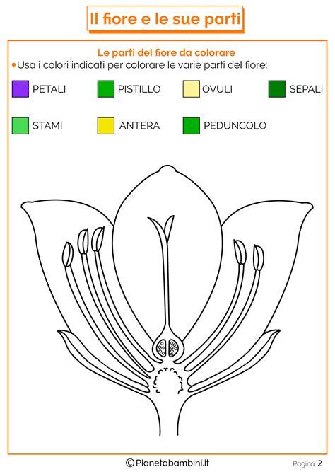 fiore disegni tante schede didattiche sul fiore e le sue parti per