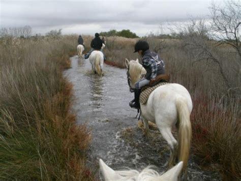 Promenade à cheval, Chez Elise   Saintes Maries de la Mer   Les avis sur Promenade à cheval