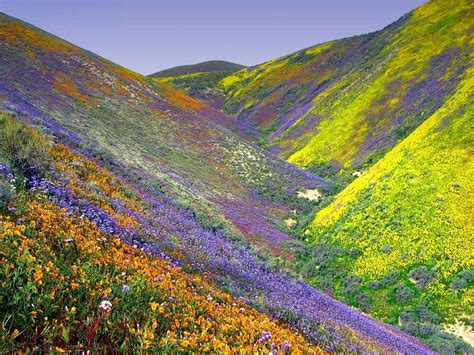 valley of flowers trek himalayas 4th to 9th august 2014