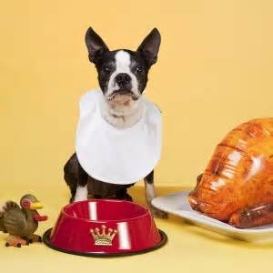 can dogs turkey bones can dogs eat bones and what are the risks fetch pet care